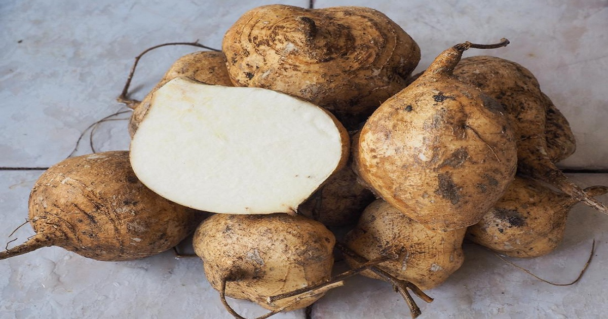 WHAT ARE THE HEALTH BENEFITS OF JICAMA?